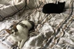 Tinka & Bijou