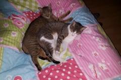 Luna & Filou