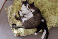 Tasha & Rayka